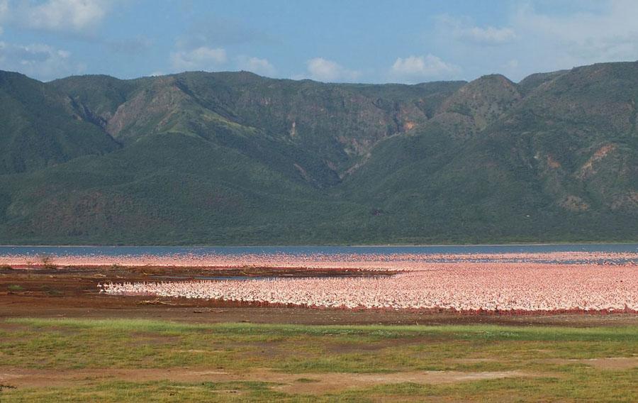 Flamingo 11 1024x646 Миллионы розовых фламинго