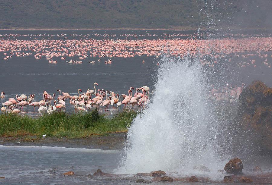 Flamingo 13 Миллионы розовых фламинго
