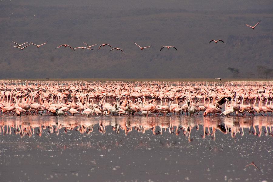 Flamingo 2 Миллионы розовых фламинго