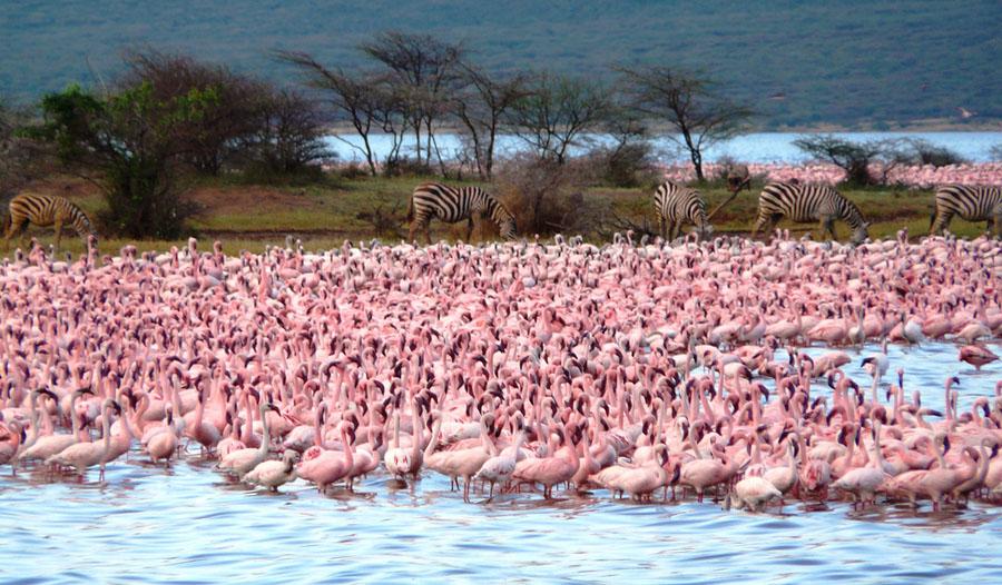 Flamingo 5 Миллионы розовых фламинго