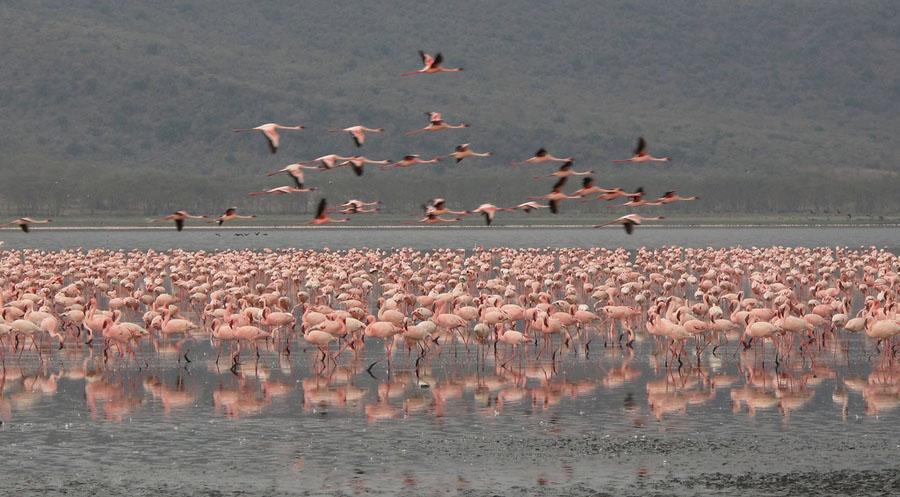 Flamingo 7 Миллионы розовых фламинго