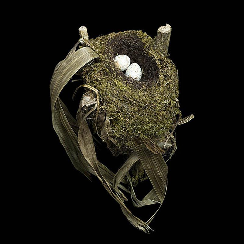 Spotted Nightingale Thrush sharon beals Шедевры природной архитектуры   птичьи гнезда