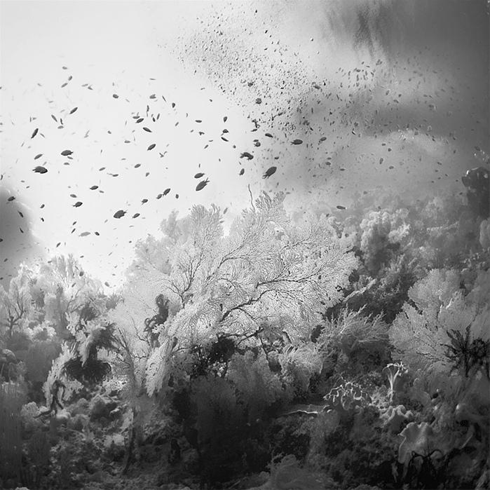 bandw14 Поэзия черно белой фотографии в работах Хенгки Коентжоро