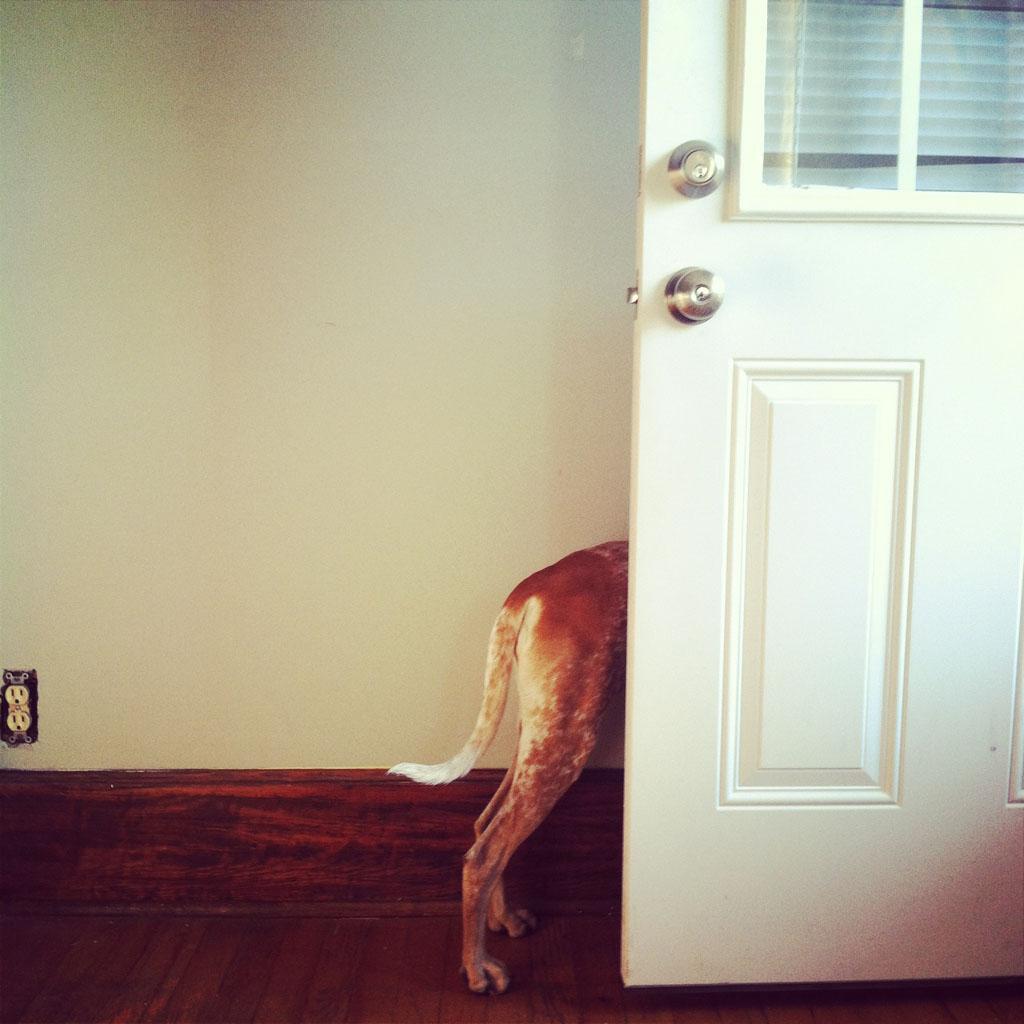 doggy02 Пес по стойке смирно