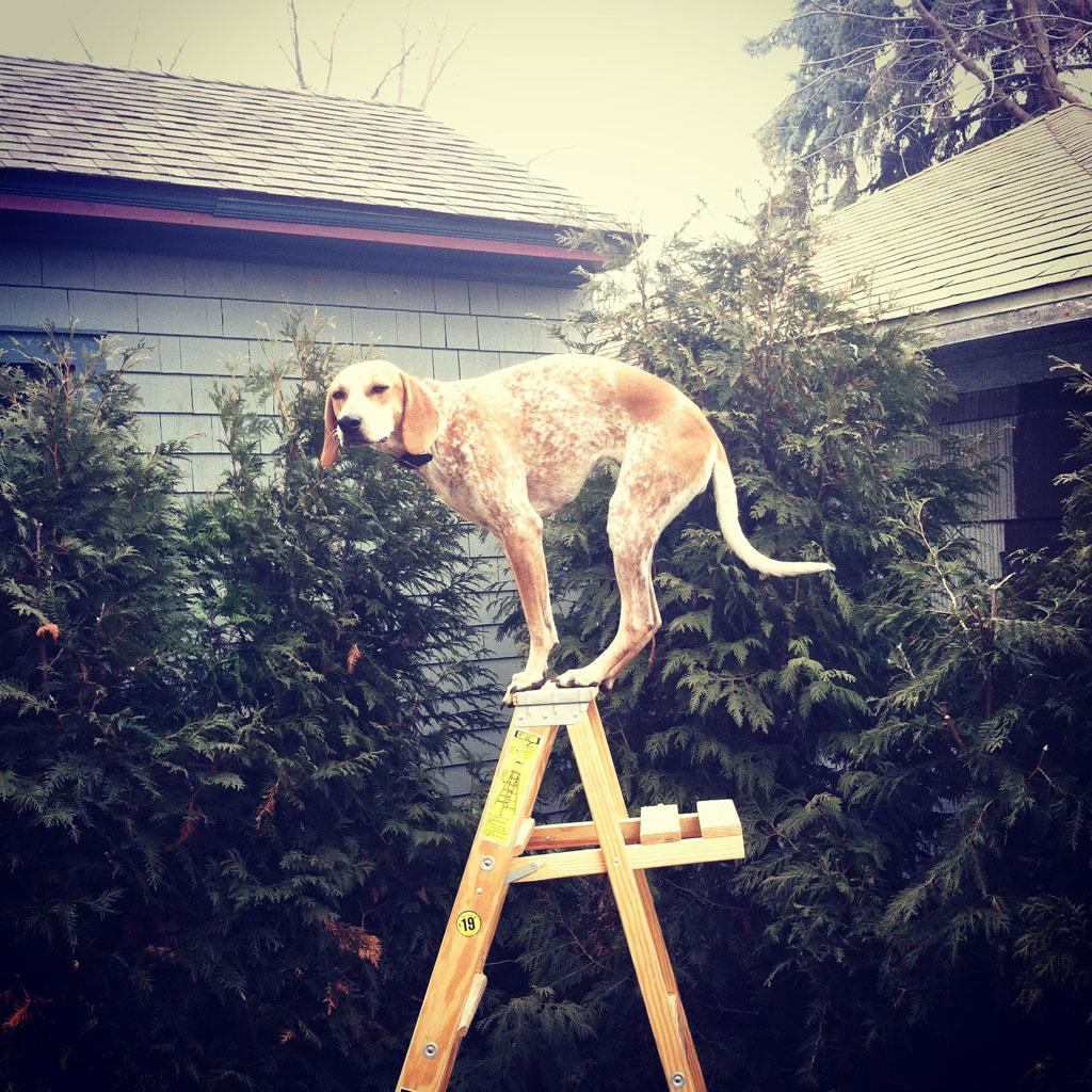 doggy03 Пес по стойке смирно