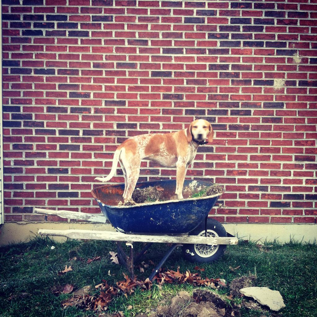 doggy06 Пес по стойке смирно