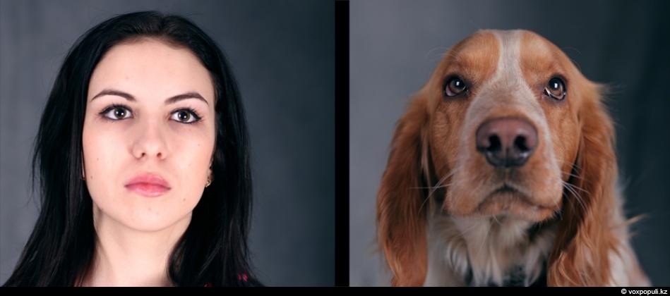 doggycat02 Собаки vs кошки