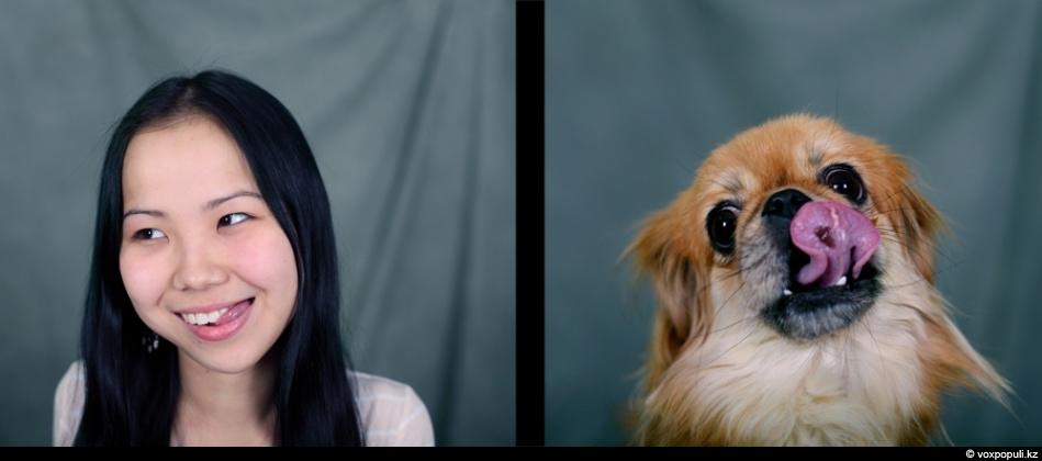 doggycat03 Собаки vs кошки