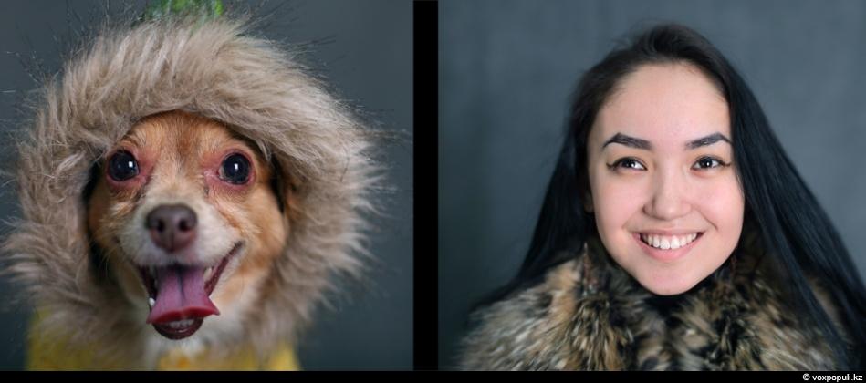 doggycat06 Собаки vs кошки