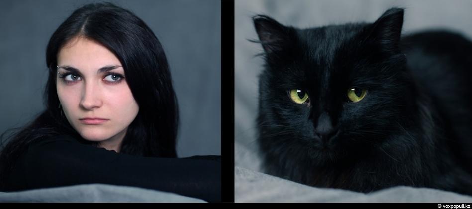 doggycat07 Собаки vs кошки