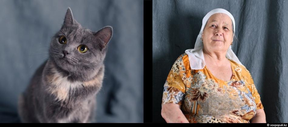 doggycat10 Собаки vs кошки