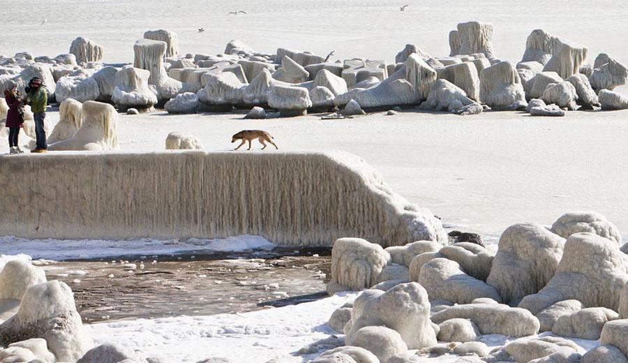 freeze08 Черное море впервые за 30 лет покрылось льдом