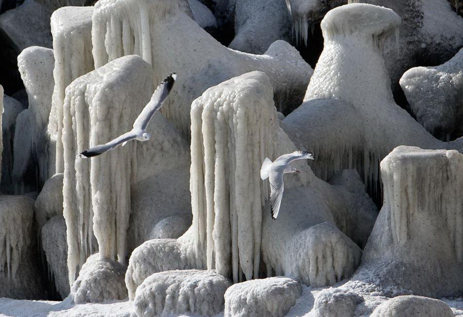 freeze09 Черное море впервые за 30 лет покрылось льдом
