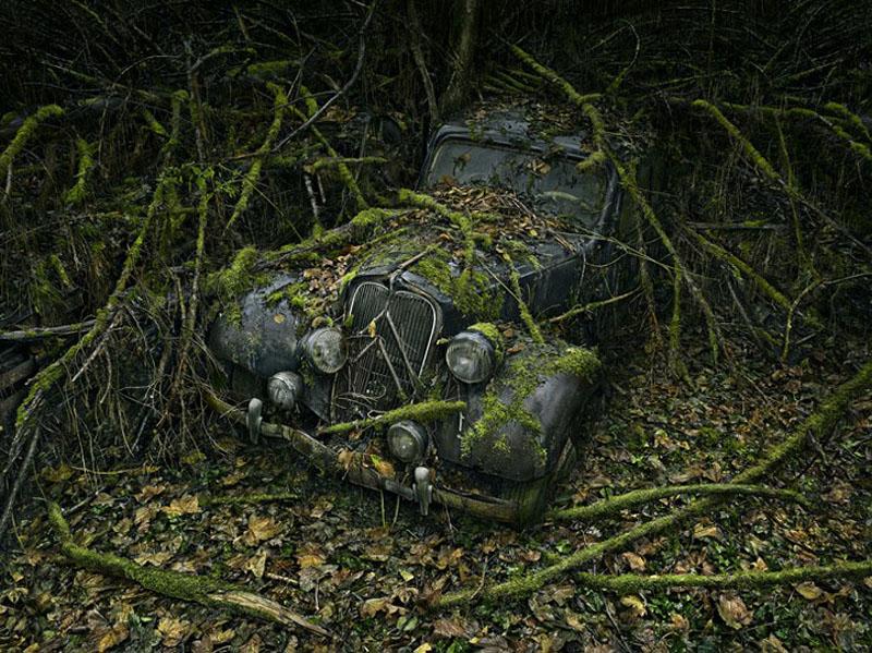 Брошенные автомобили в объятиях природы