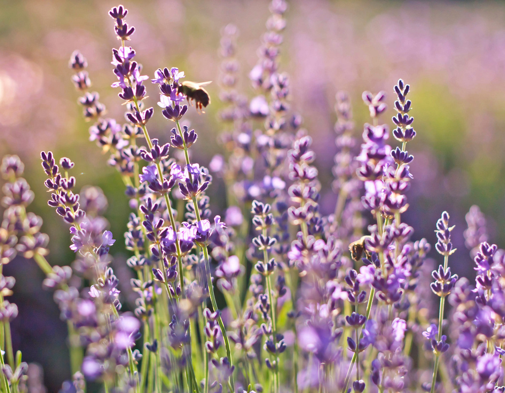 scent03 10 фактов о самых полезных запахах