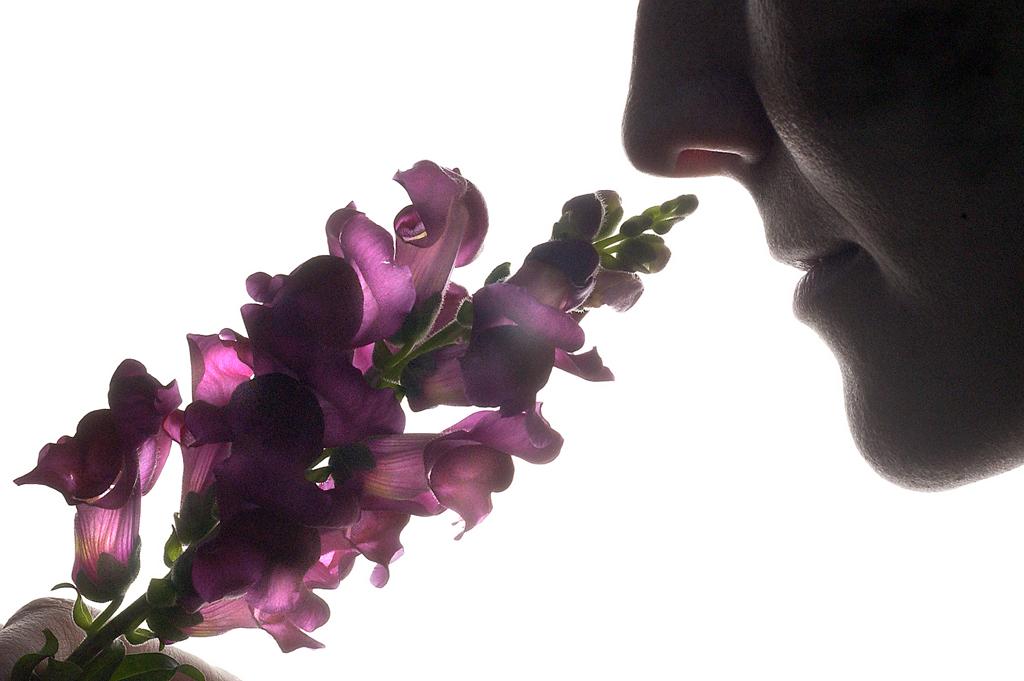 scent06 10 фактов о самых полезных запахах