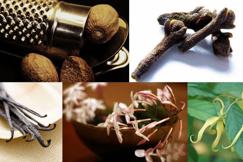 scent07 800x533 10 фактов о самых полезных запахах