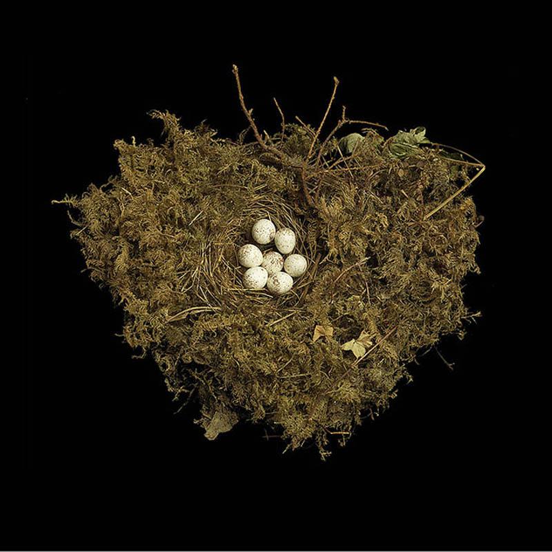 tennessee warbler sharon beals Шедевры природной архитектуры   птичьи гнезда