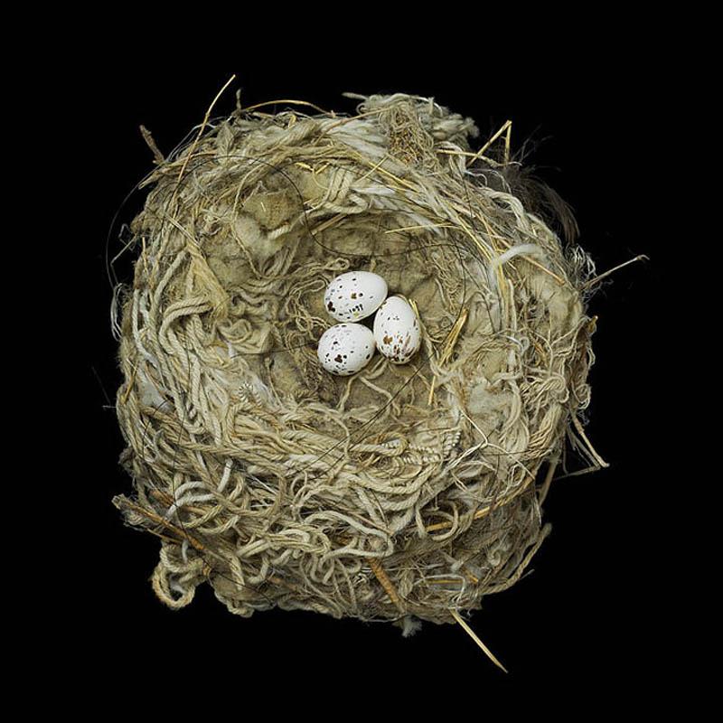 tryrannus verticalis sharon beals Шедевры природной архитектуры   птичьи гнезда