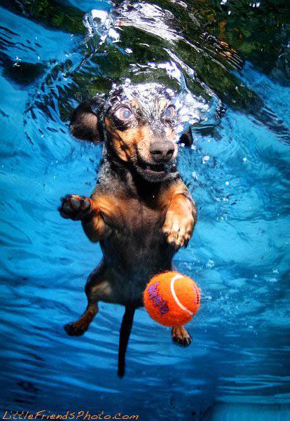 underwater photos of dogs seth casteel 1 Невероятный позитив: Собаки ловят мячик под водой