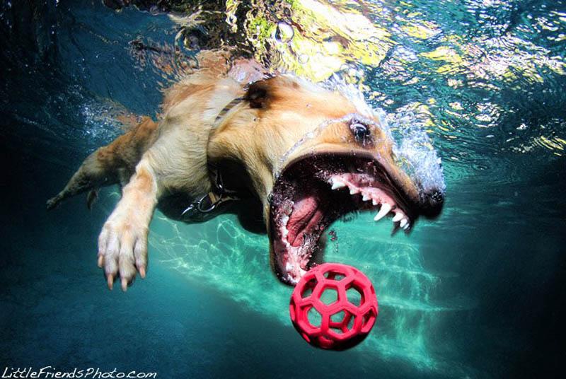 underwater photos of dogs seth casteel 10 Невероятный позитив: Собаки ловят мячик под водой