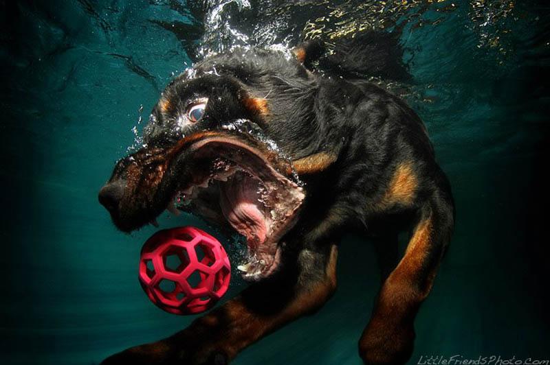 underwater photos of dogs seth casteel 11 Невероятный позитив: Собаки ловят мячик под водой