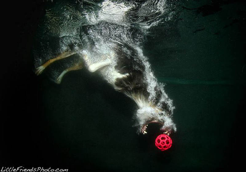 http://bigpicture.ru/wp-content/uploads/2012/02/underwater-photos-of-dogs-seth-casteel-12.jpg