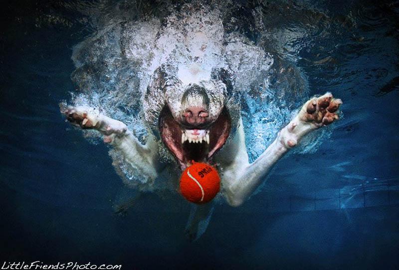 underwater photos of dogs seth casteel 2 Невероятный позитив: Собаки ловят мячик под водой