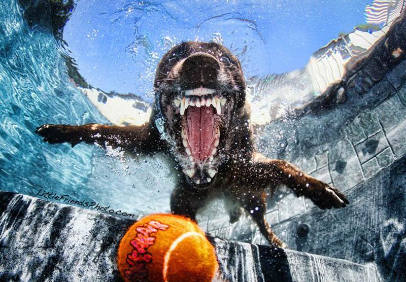 underwater photos of dogs seth casteel 3 Невероятный позитив: Собаки ловят мячик под водой