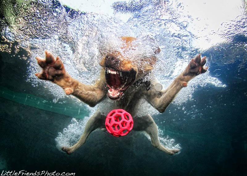 underwater photos of dogs seth casteel 5 Невероятный позитив: Собаки ловят мячик под водой