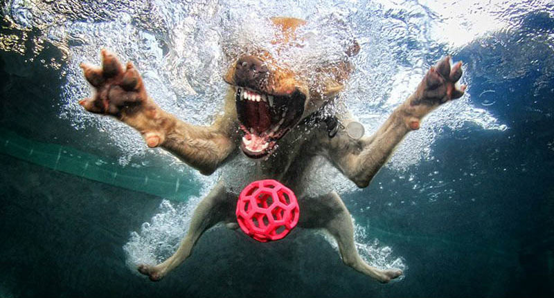 underwater-photos-of-dogs-seth-casteel-5