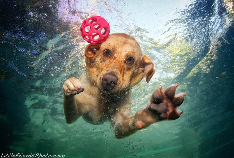 underwater photos of dogs seth casteel 8 Невероятный позитив: Собаки ловят мячик под водой