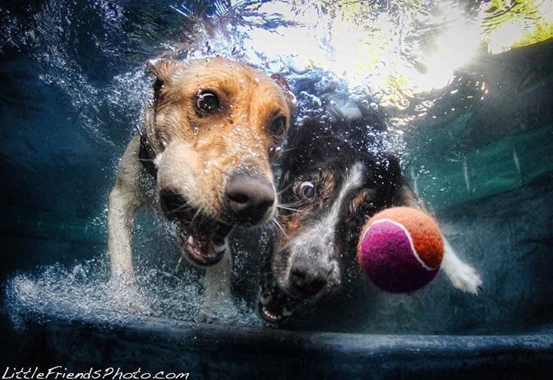 underwater photos of dogs seth casteel 9 Невероятный позитив: Собаки ловят мячик под водой
