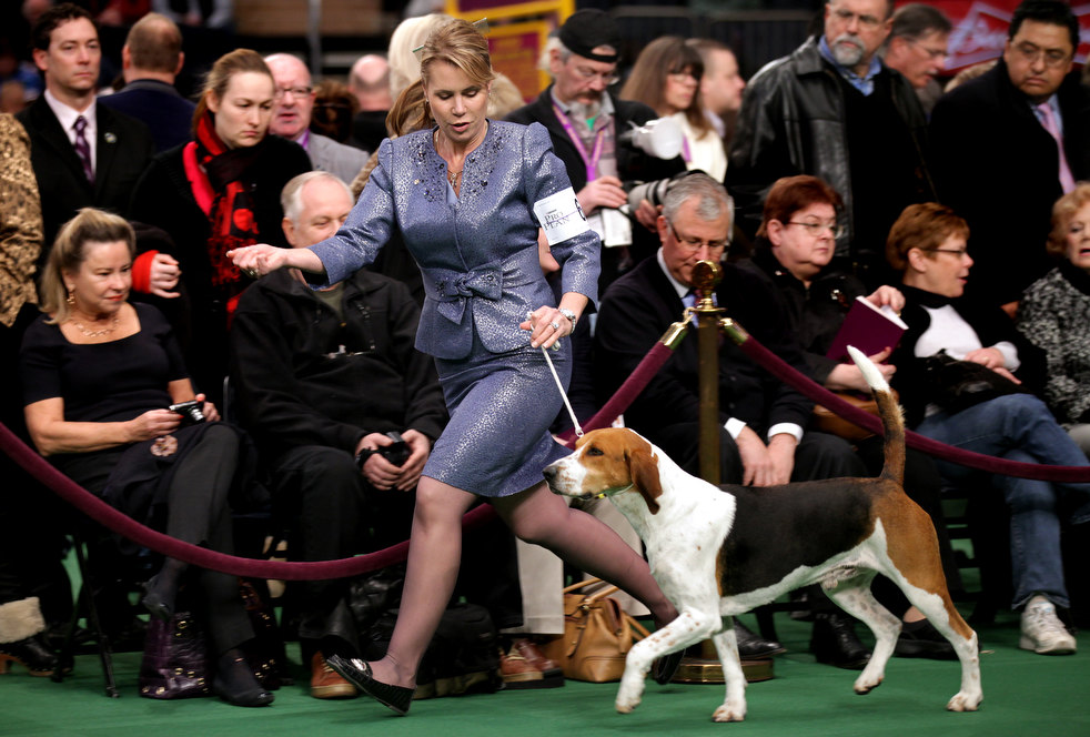 westminster dog show 10 Выставка собак Westminster Kennel Club 2012