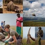 Война за носорогов