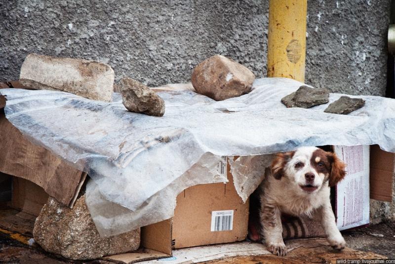 00310 Псы, которые живут на улице