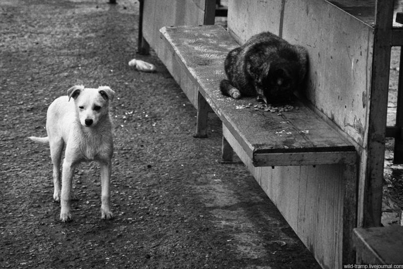 00410 Псы, которые живут на улице