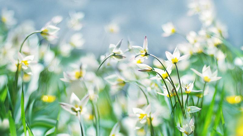 006 Весна идет...