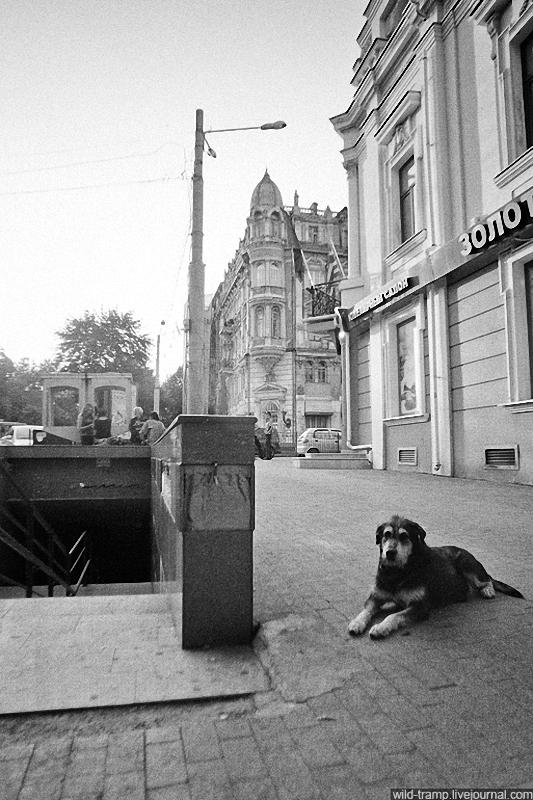 0119 Псы, которые живут на улице