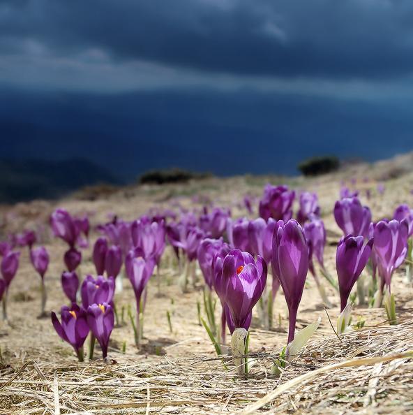 012 Весна идет...