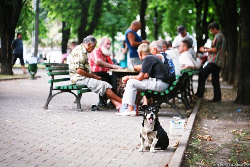 0129 Псы, которые живут на улице