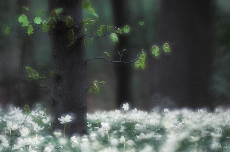 013 Весна идет...