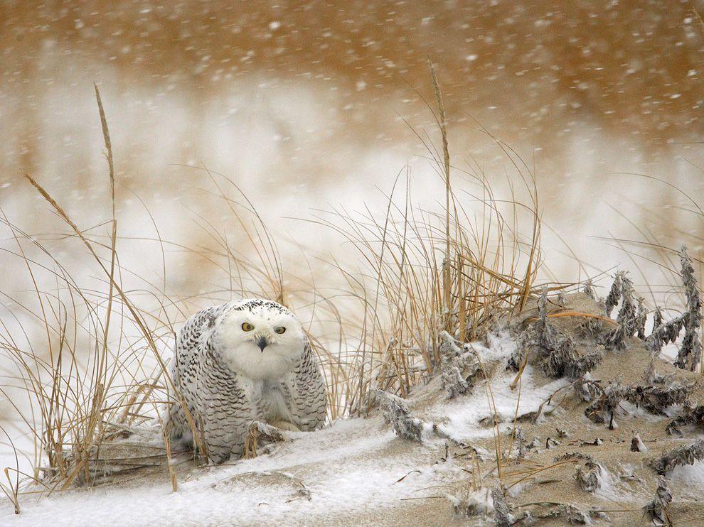 http://bigpicture.ru/wp-content/uploads/2012/03/1.jpg