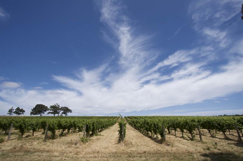 1023 35 самых красивых виноградников мира