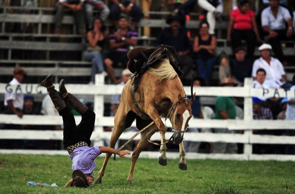 1066 Укрощение необъезженных лошадей: 20 удивительных кадров