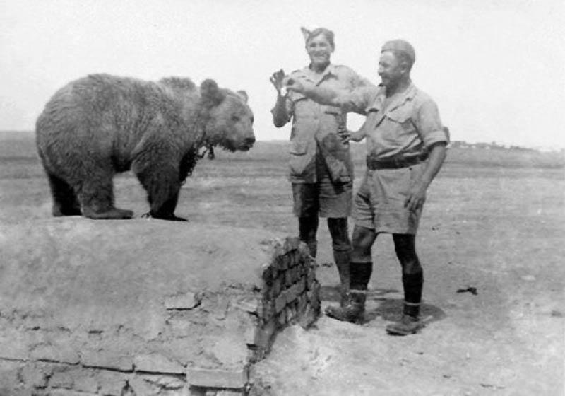 1068 Необычные солдаты Второй мировой: Войтек