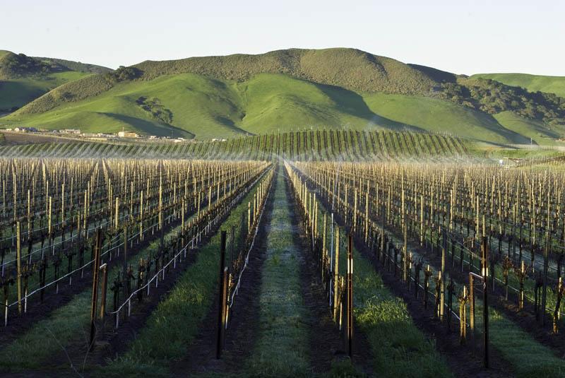 1107 35 самых красивых виноградников мира