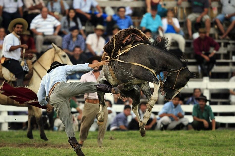 11102 Укрощение необъезженных лошадей: 20 удивительных кадров