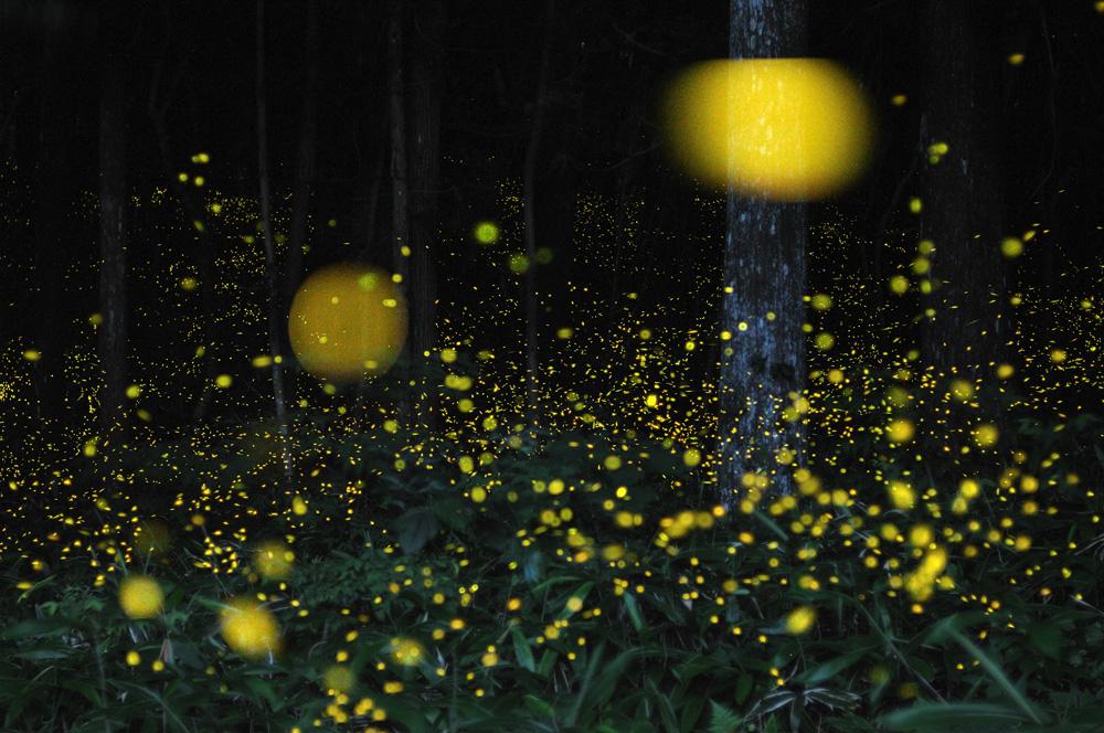 113 Светлячки Цунеяки Хирамацу