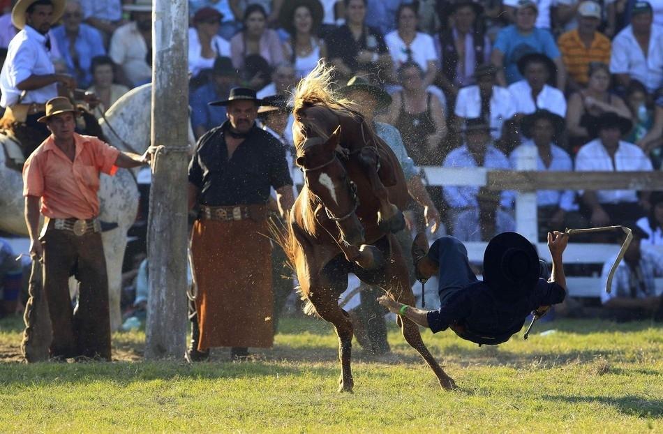 1202 Укрощение необъезженных лошадей: 20 удивительных кадров